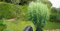 barrera bambu rizoma