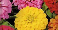 flores terraza feng shui