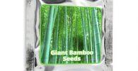 Comprar semillas de bambú moso