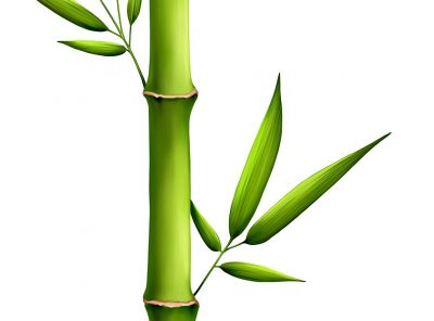 Gel fijador para cabello con extracto de bambú