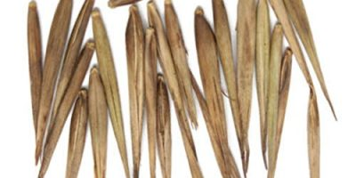 sembrar bambu paso a paso en 2020